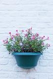 Flor en un escondrijo-pote Fotos de archivo
