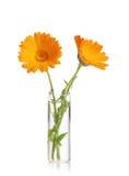 Flor en un florero Imágenes de archivo libres de regalías