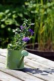 Flor en un florero Fotografía de archivo