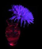 Flor en un florero Foto de archivo libre de regalías