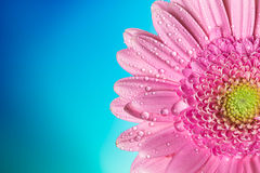 Flor en un fondo azul Imagen de archivo libre de regalías