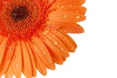 Flor en un fondo blanco Fotos de archivo