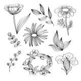 Flor en un fondo blanco Fotografía de archivo libre de regalías