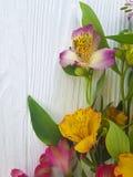 Flor en un fondo de madera blanco, marco del Alstroemeria Foto de archivo libre de regalías
