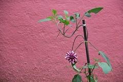 Flor en un fondo púrpura Foto de archivo libre de regalías