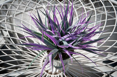 Flor en un pote. foto de archivo