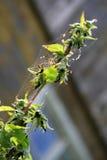 Flor en un web Imagen de archivo libre de regalías