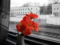 Flor en ventana del tren Fotos de archivo libres de regalías