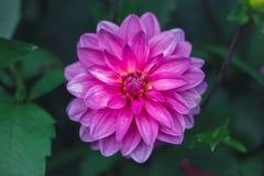 Flor en verano Imagen de archivo libre de regalías