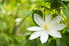 Flor en verde Fotografía de archivo libre de regalías