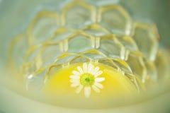 Flor en vidrio Imagen de archivo
