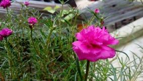 Flor encantadora fotos de archivo