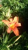 Flor encantadora Foto de Stock Royalty Free