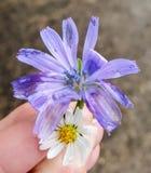 Flor encontrada no meio do inverno imagens de stock royalty free