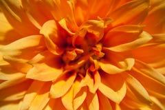 Flor ensolarada Fotografia de Stock