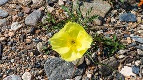 Flor entre as pedras fotos de stock royalty free