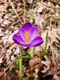 Flor entre las hojas Imagen de archivo