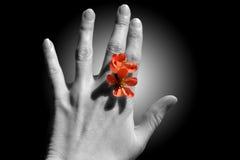 Flor entre los dedos Fotos de archivo