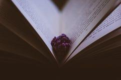 Flor entre páginas do livro Fotos de Stock