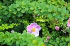 Flor escondendo Imagem de Stock