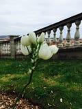 Flor espanhola foto de stock