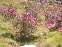 Flor espesa Foto de archivo