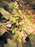 Flor espinosa Fotos de archivo