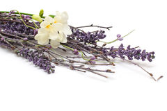 Flor - estilo de Provence Imagens de Stock Royalty Free