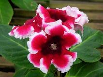 Flor estranha Foto de Stock Royalty Free