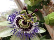 Flor exótica Imagens de Stock Royalty Free