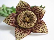 Flor exótica Fotografía de archivo libre de regalías