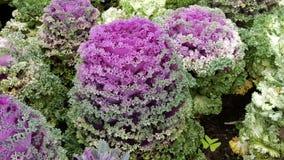 Flor exótica Foto de Stock Royalty Free