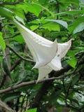 Flor exótica blanca Cerdeña, Cagliari Belleza de la naturaleza imagen de archivo libre de regalías