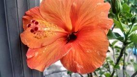 Flor exótica con la abeja Imágenes de archivo libres de regalías
