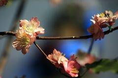 Flor exótica de la flor Fotos de archivo libres de regalías