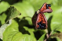 Flor exótica del verano Fondo enmascarado Foto de archivo