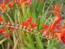 Flor exótica do vermelho do vermelho do fleur de Plante imagens de stock
