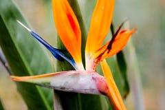 Flor exótica em um jardim Fotografia de Stock Royalty Free