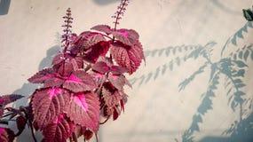 Flor exposta Fotografia de Stock