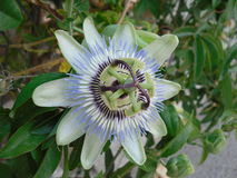 Flor extraña Imagenes de archivo