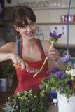 Flor fêmea de Cutting Stem Of do florista fotografia de stock royalty free