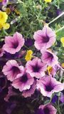 Flor f Imagen de archivo