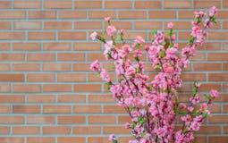 Flor falsa de Sakura Fotografía de archivo libre de regalías