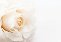 flor falsificada cor-de-rosa no fundo branco, foco macio Imagens de Stock
