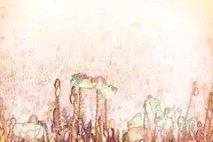Flor feita com técnicas da aquarela - ilustração da papoila Fotos de Stock Royalty Free