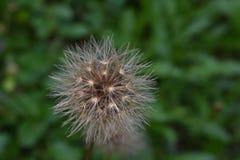 Flor feliz Imagen de archivo