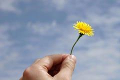 Flor feliz de la mano Imagenes de archivo