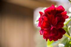 Flor finalmente pequeña imagenes de archivo