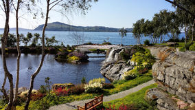 Flor&fjære do jardim em Noruega, Stavanger Fotografia de Stock Royalty Free