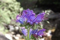 Flor/fleur Image libre de droits